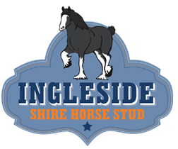 Ingleside Shire Horse Stud