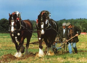 Shires ploughing
