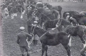 Filly foals at the Shire Stallion Produce Stakes, 1930